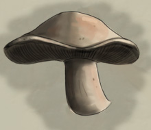 mushdreadmushroom